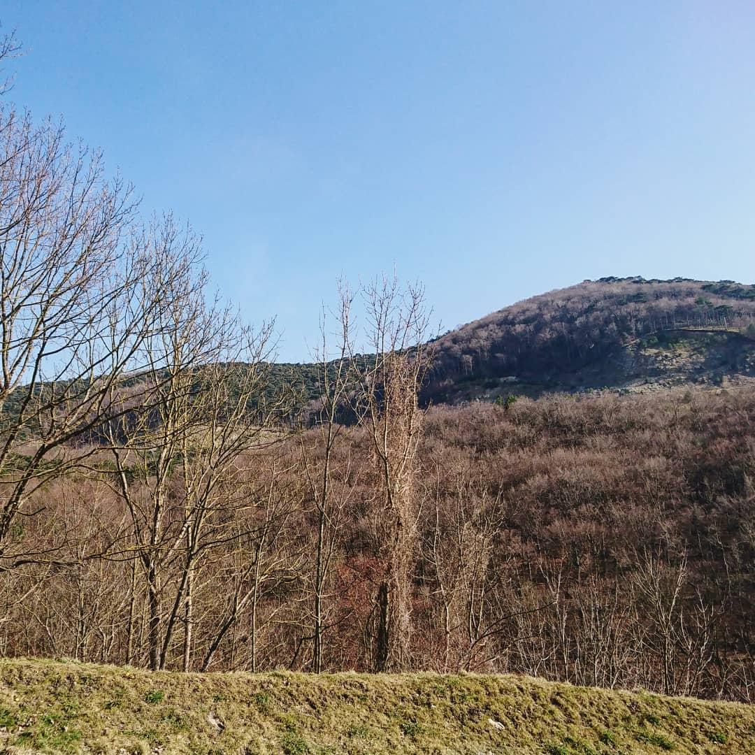 Waldmühle Rodaun